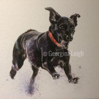 'Labrador After the Rain'